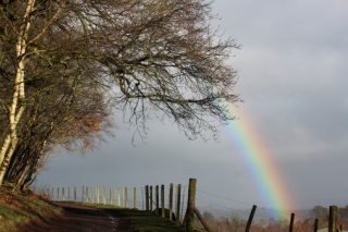 rainbow next to a tree-lined fence