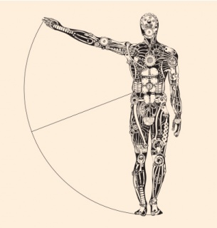 Ideal human proportion that governs the universe. Making of Humans.